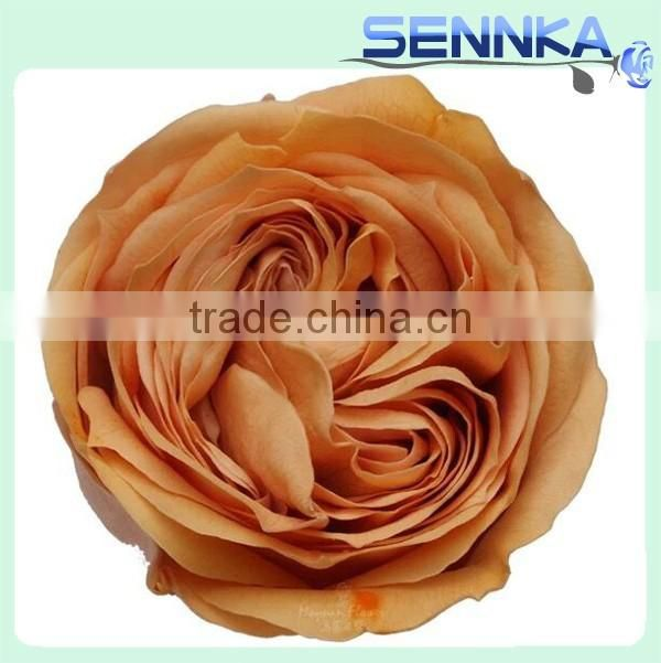 Hobby lobby wholesale real natural preserved austin roses preserved hobby lobby wholesale real natural preserved austin roses preserved flowers cheap price mightylinksfo