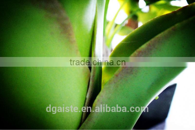 Y8463-15-1LS( 2014 hot sale Factory direct Extra large banana trees for hotel decoration )