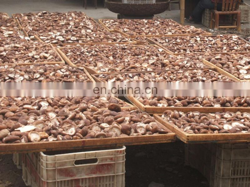 New design oyster mushroom bag filling machine for farm