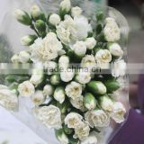 Fresh new coming flower carnation and rose for wedding decoration