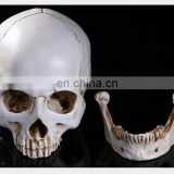 Halloween resin skull heads for decoration