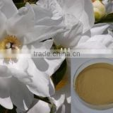 100% Herbal White Peony Extract 98% Paeoniflorin in stock