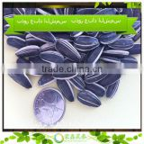 2014 Large Size Sunflower Seeds Specification Inner Mongolia