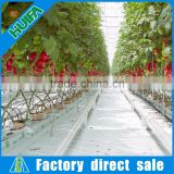 Agriculture Hydroponic Growing Systems with Coco Peat Grow Bags for Tomato Capsicum Strawberry Greenhouses