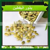 Pumpkin Kernels High Quality Pumpkin Seeds without shell, Pumpkin kernels GRADE AA