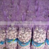 HACCP,ISO Certification and Liliaceous Vegetabless Product Type red Fresh garlic 2015 price