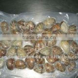 Frozen Boiled Baby Clam IVP