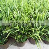 evergreen popular creative craft artificial green grass with pot fake grass bonsai for garden ornaments