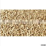 High Quality Hulled sunflower kernels seeds, bakery grade