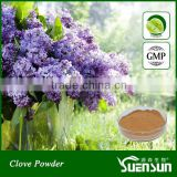 Natural Spices Clove Powder in Bulk Supply