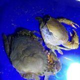 INquiry about Soft Shell Crab Farming Box - RAS System