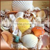 Mixed colorful SeaShell Beach for Home and photo frame Decoration 100g/bag                                                                         Quality Choice