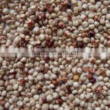 White sorghum Chinese Quality