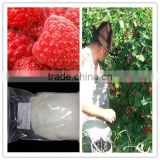 Factory supply Raspberry ketone for capsules/ Raspberry ketone for pills/raspberry ketone