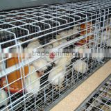 poultry battery cage system for baby chick and grown chicken