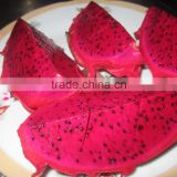 Fresh Dragon Fruit - Best Price - VIKA.