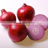 High quality fresh onion from Kego Vietnam