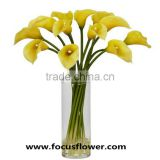 Weddings decoration indian fresh flower garlands fresh cut flowers calla lily bulbs with 10stems/bundle
