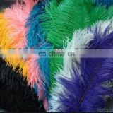 colorful 40-45cm ostrich feather from south Africa