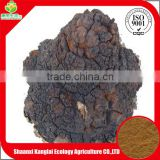 Best Selling Chaga Mushroom/Chaga Mushroom Extract Powder with Private Label Provided by Chinese Professional Manufacture