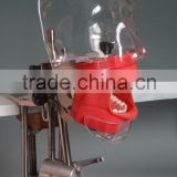 New Type High Quality Dental Phantom head dental teaching use simple head model wholesale