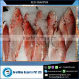 Frozen Red Snapper Fillet Fish Wholesale Supplier at Best Price