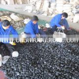 Elegant color cobble & pebbles from China manufacturer