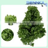 Hobby Lobby Wholesale Flowers Hydrangea Wholesale Preserved Flower Green Nautral Hydrangea For Festival Use