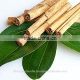 Cinnamon Leaf Oil from India
