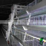chicken farm equipment automatic poultry feed machine