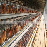 Hot sale!!!High quality industrial metal steel frame laying hen egg chicken house