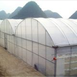 Durable multi span agriculture equipment polythene greenhouse