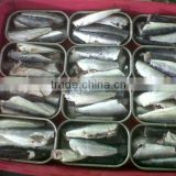 125g Canned Sardine in tomato sauce/oil/brine(WW-125) from factory price