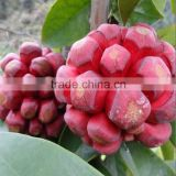 Hot Sale Kadsura Coccinea Seeds For Planting Wild Fruit Tree Seeds