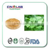 Ginkgo biloba Leaf extract Powder food grade / 100% pure and natural ginkgo biloba extract