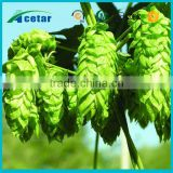 ISO22000 factory supply herb hops for sleep Humulus lupulus extract