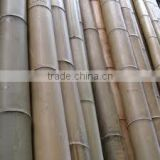 Vietnam Bamboo Pole with Cheap price