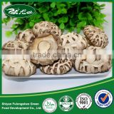 2015 new crop Wild Dried flower button mushroom