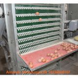 Mexico Chicken Farm Hot Galvanized Cage A Type Battery Laying Hen Cage & Layer Cage & Chicken Coop with 120 birds in Shed