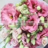 Colorful promotional anthurium plant cut flowers