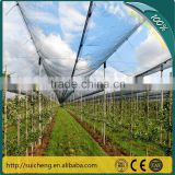Guangzhou Vegetables Protection Net/ Apple Protection Net/ Grape Protection Net