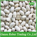 Japanese White Kidney Beans