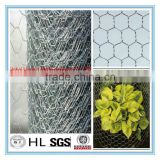 China cheap Stainless Steel Hexagonal Wire Netting/ fence netting/ woven mesh/ animal catching nets