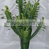 New design artificial cactus plants/wholesale artificial plants /decorative artificial plants