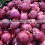 5.cm-7cm 7cm up Red Onion/Yellow Onion of Export Standard in Hot Sale