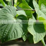 Pure Natural Kava Extract Powder. / Kava Extract Kavalactones 30%