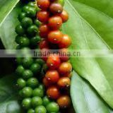 BLACK PEPPER VIETNAM ORIGIN