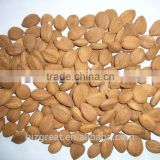 Supply with Chinese Bulk Sweet Apricot Kernels Youyi Type with good quality for Sales