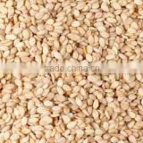 99.9% Indian Natural Sesame Seed At Best Price