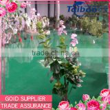 Trade assurance supplier winter jasmine tree indoor evergreen ornamental plants